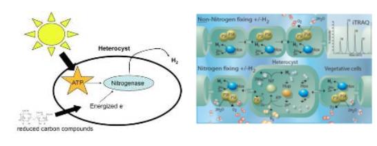 Cyanobacteria Assessment Network (CyAN)